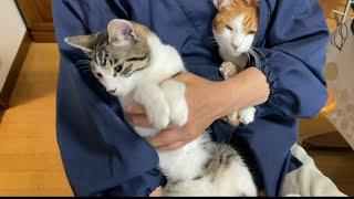 猫と二人羽織爪切り。安全です。