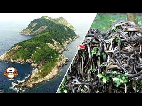 pulau-ini-berisi-ribuan-ular-paling-mem4tikan-di-dunia.!!