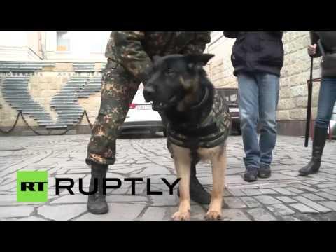 彼得堡提出给工作犬穿上防弹背心