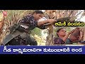 Special Story On Woman Toddy Tapper Savitri In Regode Village Of Medak | Women's Day | V6 News