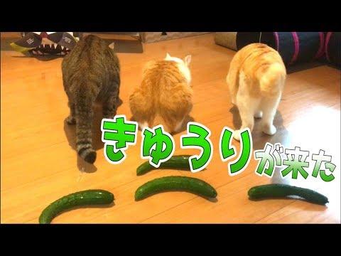 ついにうちの猫たちの後ろに『やつら』がやってきた…!