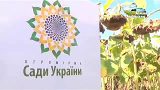 """АФ """"Сади України"""""""