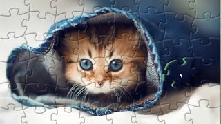 Kitten In Jeans Puzzle Game Animals Jigsaw Rompecabeza
