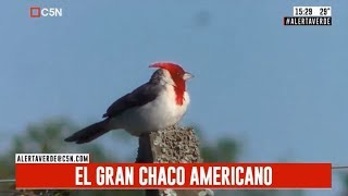 Alerta verde: El gran Chaco Amerricano (parte 2)