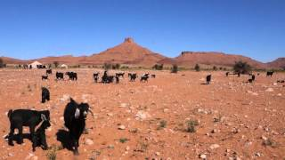 Goats in nomad camp in Sahara Desert Morocco
