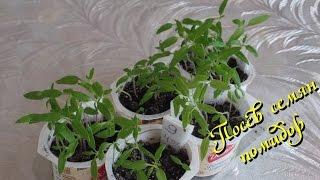 Посев семян помидор (томатов) и выращивание рассады.Часть 1-я