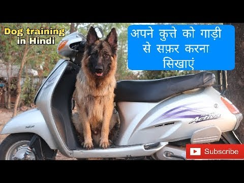 How to train a dog to travel on 2 wheeler vehicle | Dog training in Hindi |