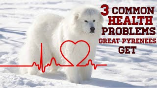 3 common health problems Great Pyrenees can develop