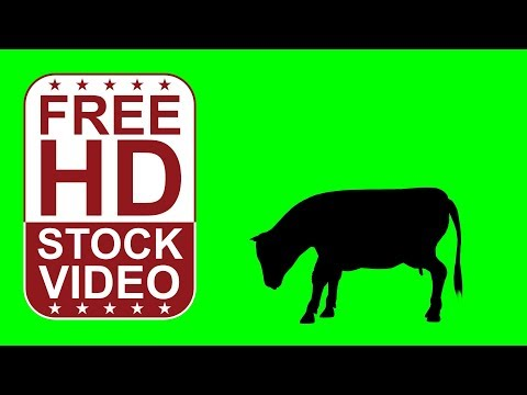 FREE HD video backgrounds – animal silhouette cow eating on green screen