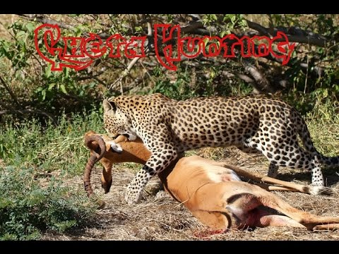 Wild Life Facts | African Wild Animals | Animal Hunting Deer ...