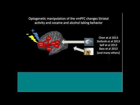 NIH Multimodal Brain Stimulation Speaker Series - Colleen Hanlon, Ph.D.