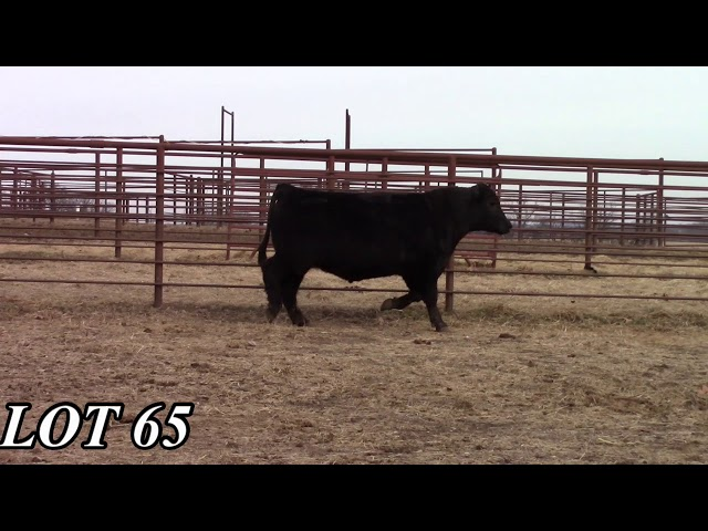 Mead Angus Farms Lot 65