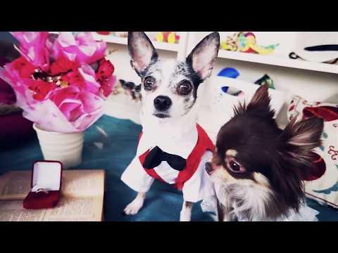 Собаки ПОЖЕНИЛИСЬ и хомяки свидетели! Собачья свадьба и хомки в зоопарке Magic Family