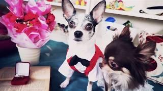 Download Собаки ПОЖЕНИЛИСЬ и хомяки свидетели! Собачья свадьба и хомки в зоопарке Magic Family Mp3 and Videos