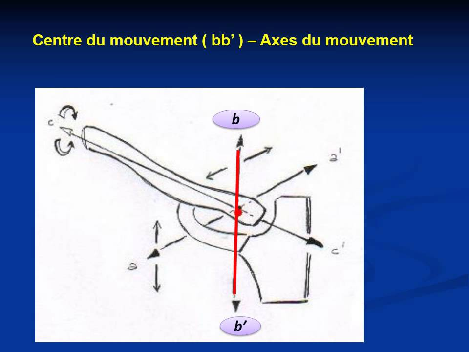 ANATOMIE MS Articulation sterno costo claviculaire - YouTube