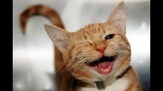 🐱Funny and Cute Cats compilation 2018🐱