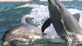 Watch Prince Dolphin video