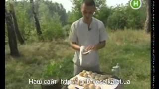Гриб Веселка