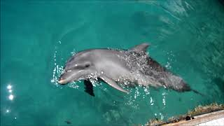 Dolphins Pacific Palau