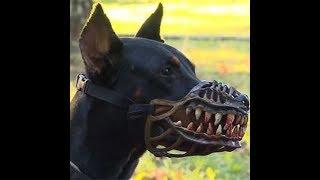 ТОП 10 - Най-опасни породи кучета! - (ВИДЕО)