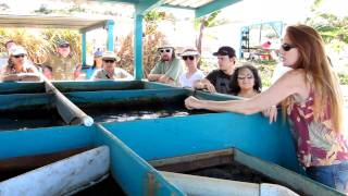 Aquaponic Training Course at Friendly Aquaponics Inc., Hilo, Hawaii, Oct., 2010 3
