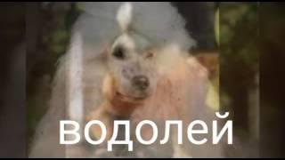 Гороскоп \