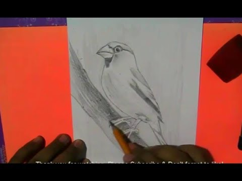 how-to-draw-a-beautiful-bird-with-3b-and-8b-pencils-|-yzarts-|-yzarts