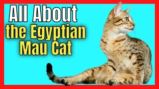 Everything You Need To know About the Egyptian Mau Cat