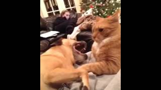 Cat swats at dog in the face
