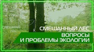 Видео 360 | Смешанный лес. Вопросы и проблемы экологии.
