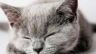 приколы с кошками,колыбельная