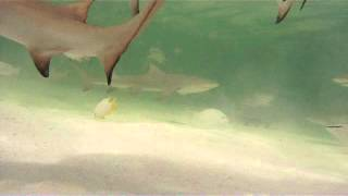 Bimini Video 2012 Youtube Thumbnail
