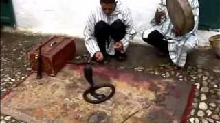 Real Moroccan Snake Charmer