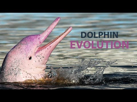 Is it true that Dolphins Evolved from Terrestrial Animals?