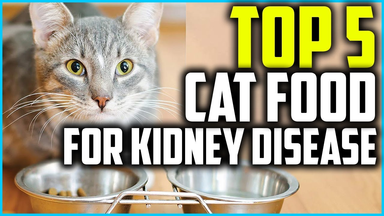 Top 5 Best Cat Food For Kidney Disease In 2020 Youtube