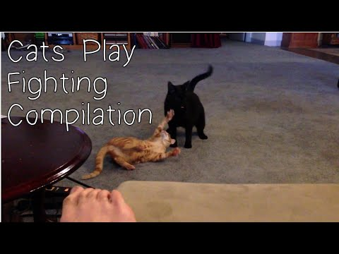 Cats play fighting compilation