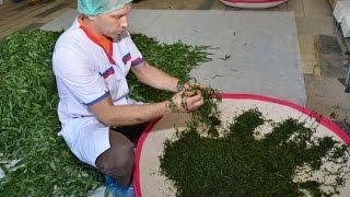 видео Копорский чай