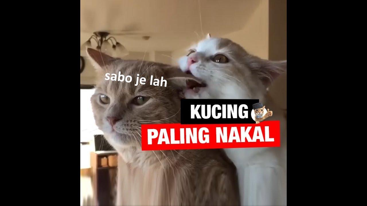 Kucing paling NAKAL