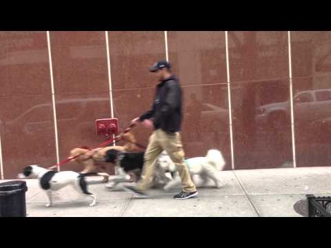New York Dog Walkers