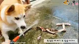 """""""언젠간 잡고 말 테다!""""..'…"""