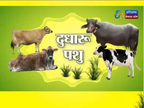 Annadata - अन्नदाता - 8th Jun 2016 - News18 Punjba/Haryana/H