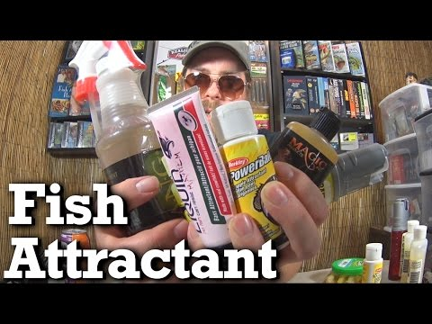 Do Scents And Fish Attractants Really Catch More Fish?