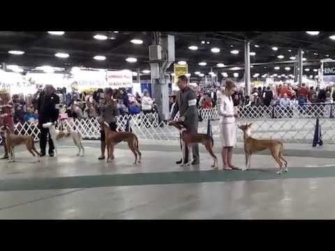 Beezerfest - Best of Breed (Part 3) - Sat March 15, 2014
