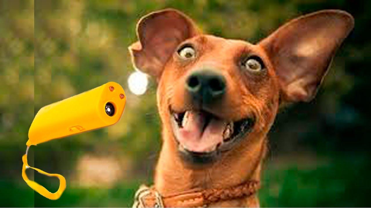 Ультразвуковой отпугиватель собак с Али