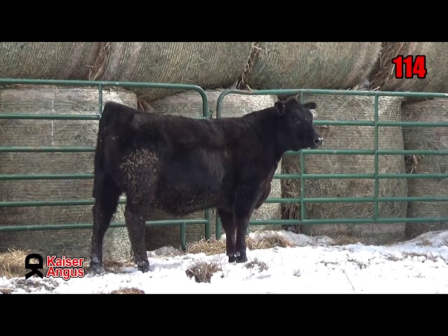 Kaiser Angus Ranch Lot 114