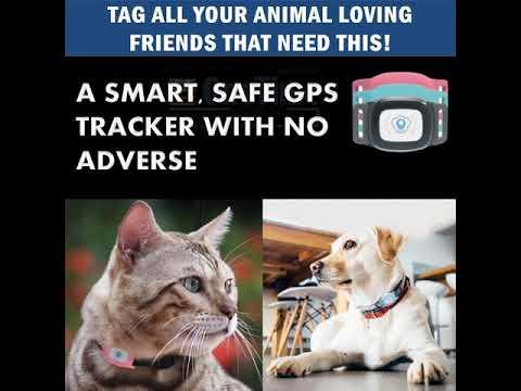 Smart GPS Tracker Collar | OneTime Deal