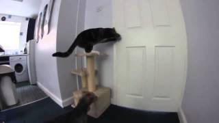 Коты умнее собак