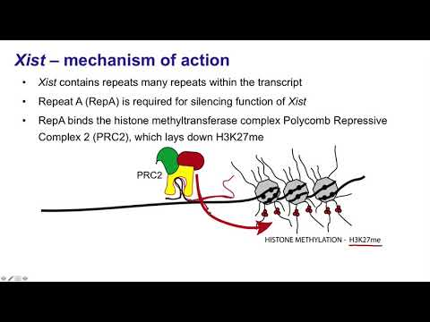 8.   Long noncoding RNAs Xist and HOTAIR
