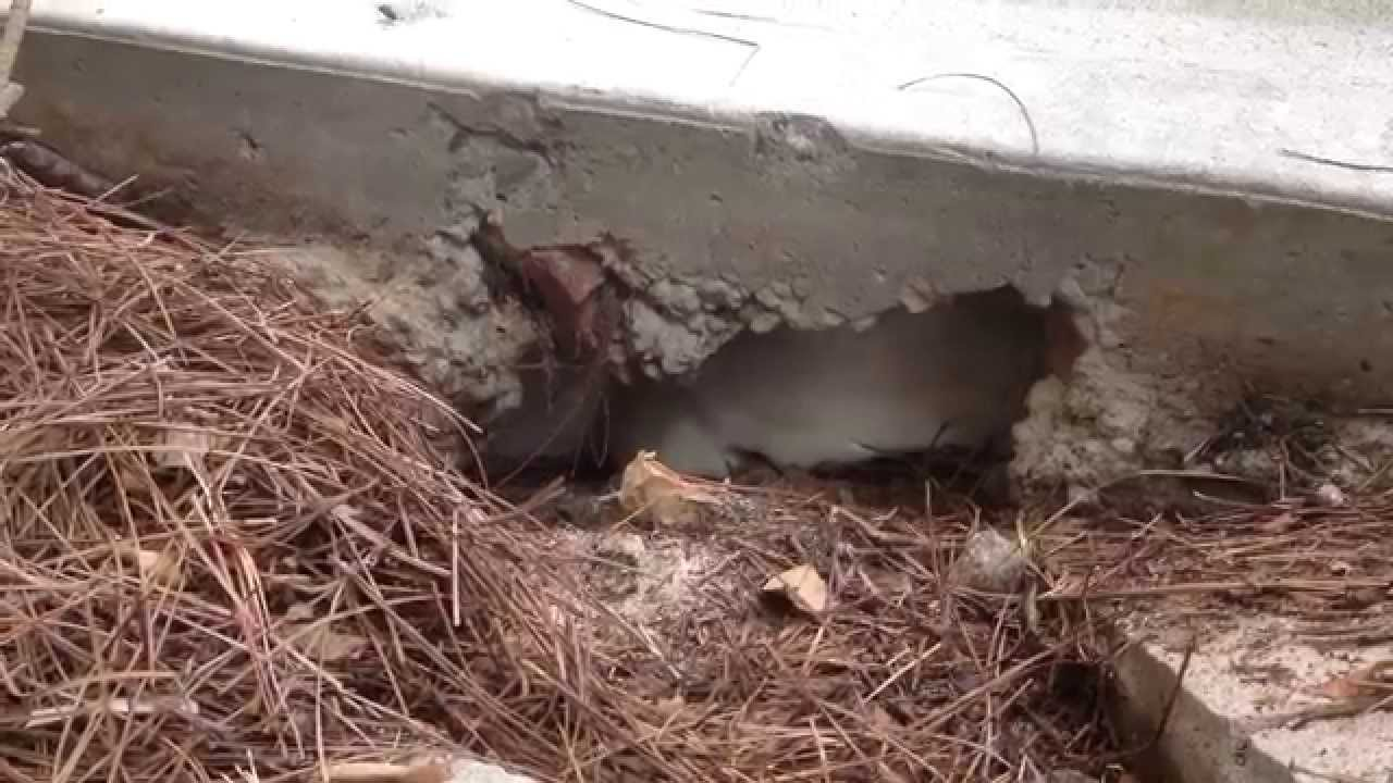Driveway Void Fill Youtube