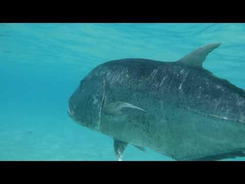 Aitutaki Lagoon - Cook Islands